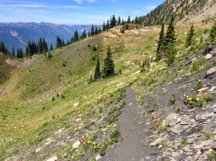 Looking back, with wildflowers along the trail